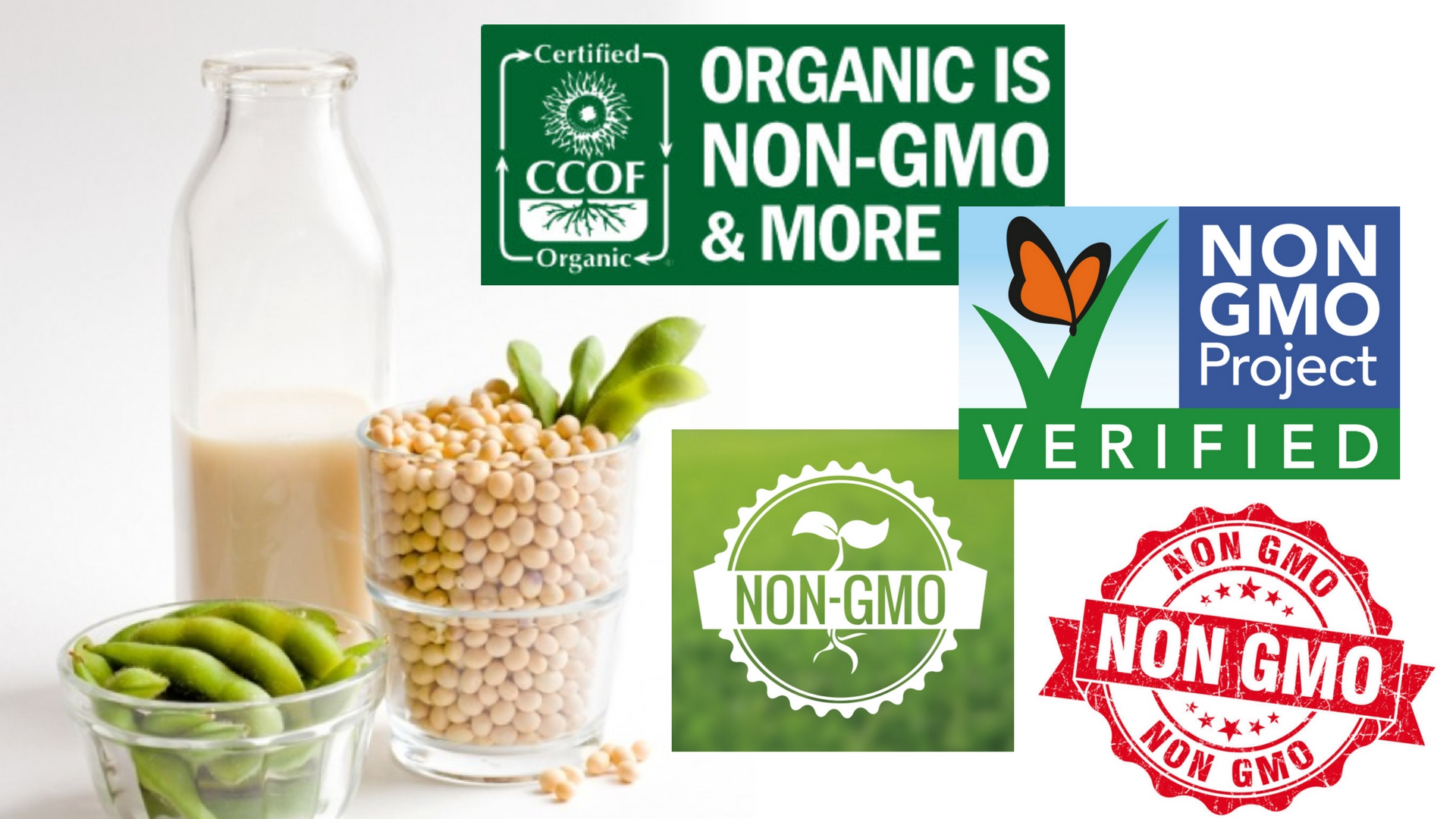 Are GMO's Safe? How to Read Food Labels